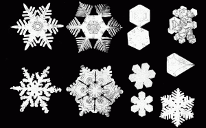 PSM_V53_D092_Various_snow_crystal_forms